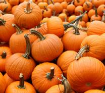 Pumpkins Decorative Bins