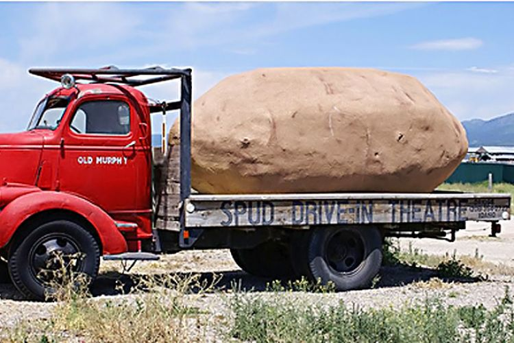 Join Us for the Potato Harvest Tour