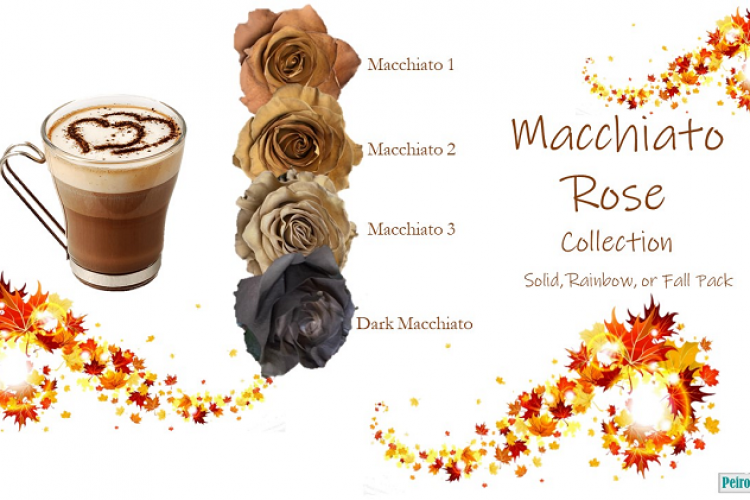 Macchiato Rose Collection