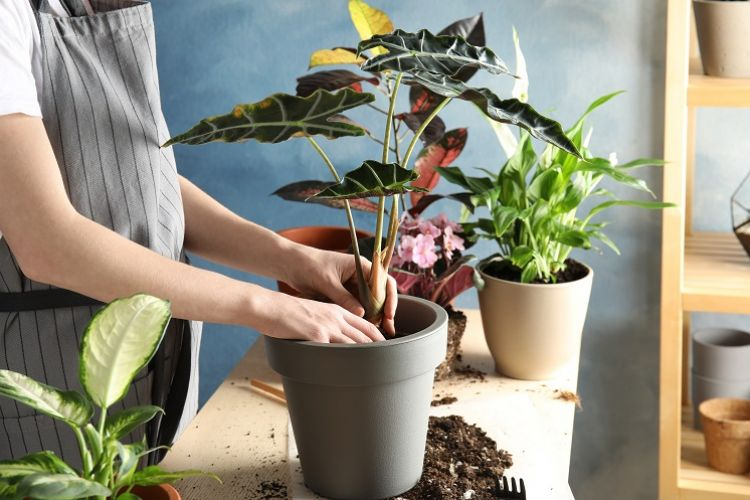 A Beginner's Guide To Indoor Plant Pests