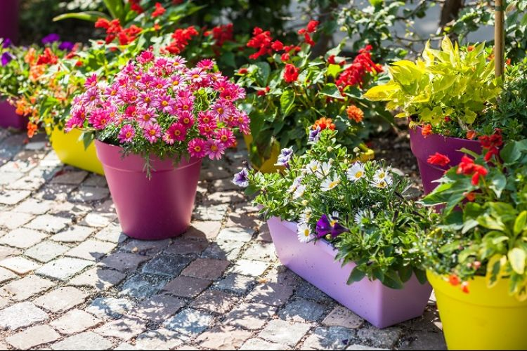 Proper Watering for Your Spring Rack Plants & Hanging Baskets